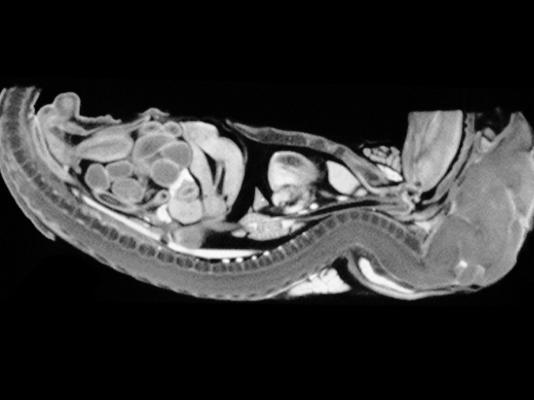 マウスのX線CT撮影画像1