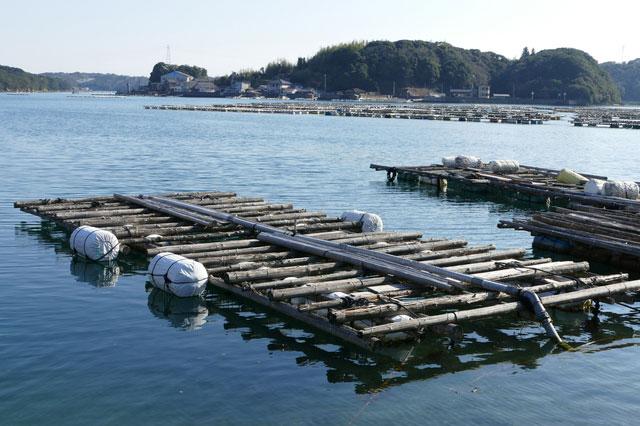 漁業関連(養殖業、定置網業等)